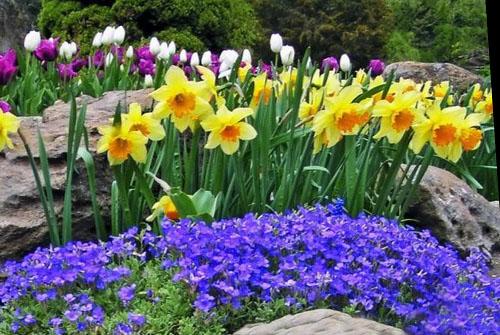 Синие цветы для сада