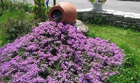 Как сделать льющиеся цветы в саду