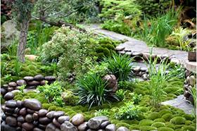 Каменистые сады в ландшафтном дизайне