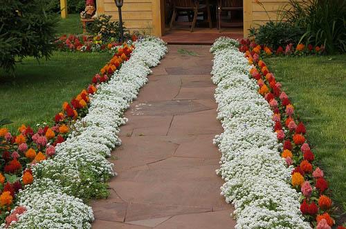 Фото бордюров с цветами