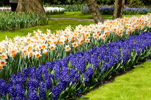 Фото различных цветущих цветов