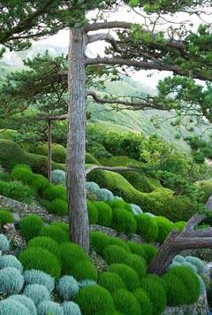 Сантолина зеленая