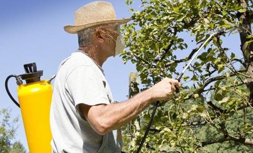 Яблоня обработка