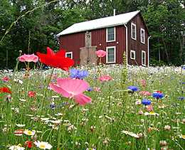 Посевной цветочный газон